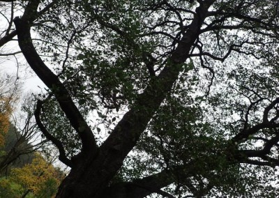 Expedice za stromy (14)