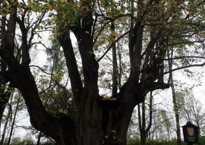 Expedice za stromy (10)