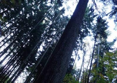 Expedice za stromy (4)