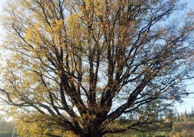 Expedice za stromy (2)