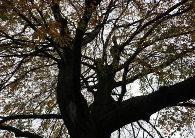 Expedice za stromy (23)